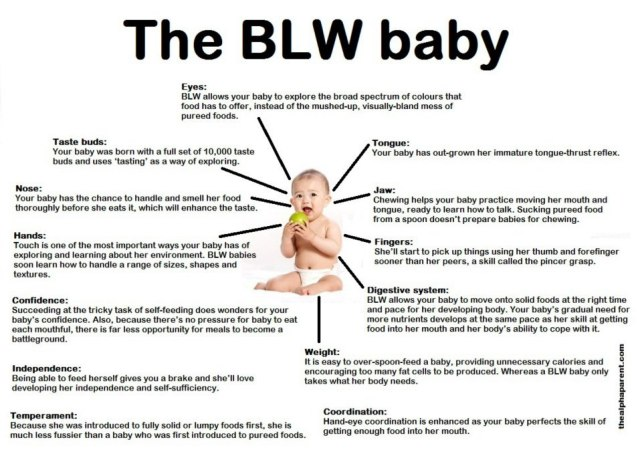 Baby-Led-Weaning-Poster-by-The-Alpha-Parent